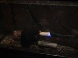 世界最小ROVっぽいミツワモデルの深海潜水艇