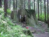 直径5mを超える杉の根っこ。幹は明治に燃えてしまった残念。