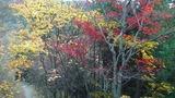 天台寺周辺は紅葉が綺麗