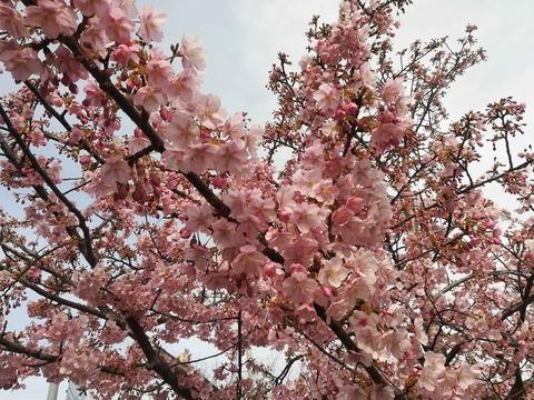 kawazu20200301_4_tutui