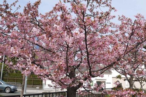 kawazu20200301_2_tutui