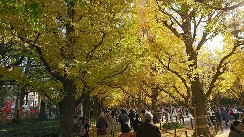 紅葉を見に神宮外苑へ
