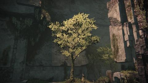 28 ど根性木