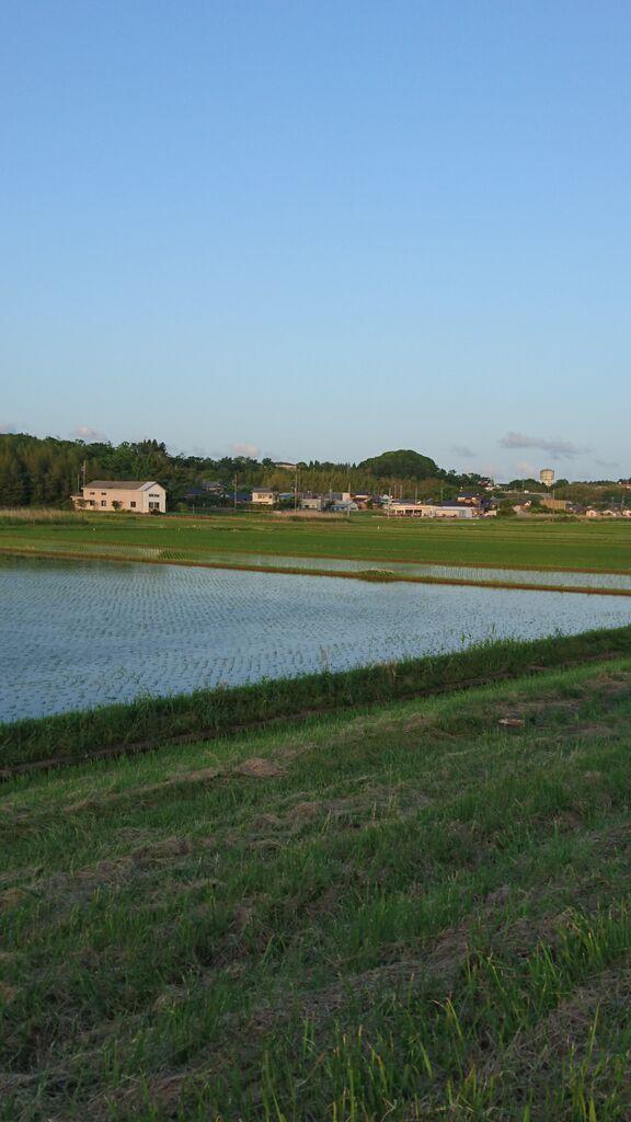 筑波山と田んぼ2