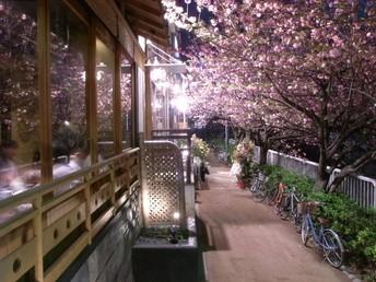【お花見情報】中目黒で花見ができる居酒屋特集