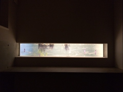 水槽ライトアップ