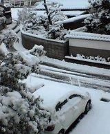 定点観測:一晩のうちに積雪12センチ