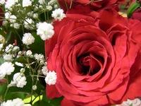 1107 花束バラ B