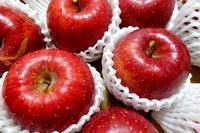 1802 リンゴ B