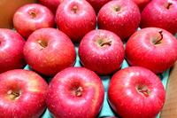 1712 リンゴ A