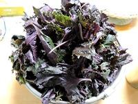 1706 紫蘇の葉 A