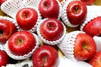1802 リンゴ A