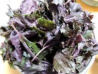 1706 紫蘇の葉 B