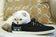 テイラー・スウィフト猫28