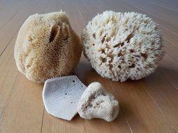 シミ島海綿