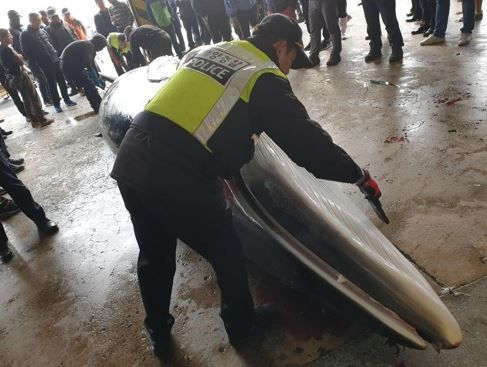 韓国人「クジラの死体が700万円!」韓国で偶然網にかかって死んだクジラが700万円で取引される‥ 韓国の反応