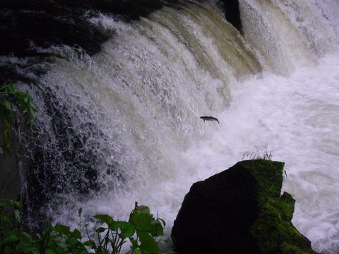 10.07.11サクラの滝11