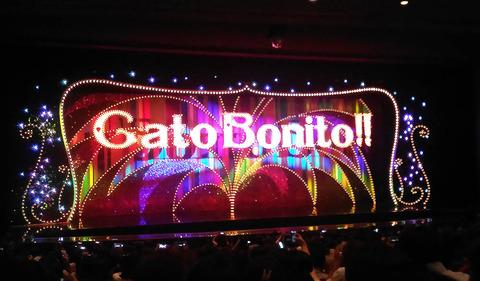 Gatobonito