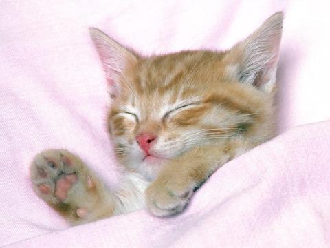 cat01191