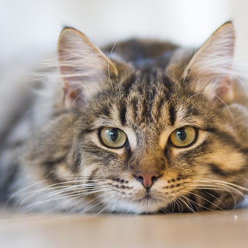 cat-1686730_1920
