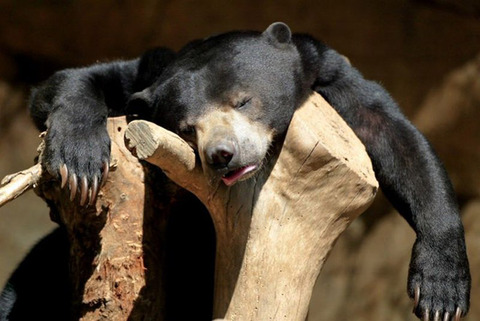 hungover-animals14