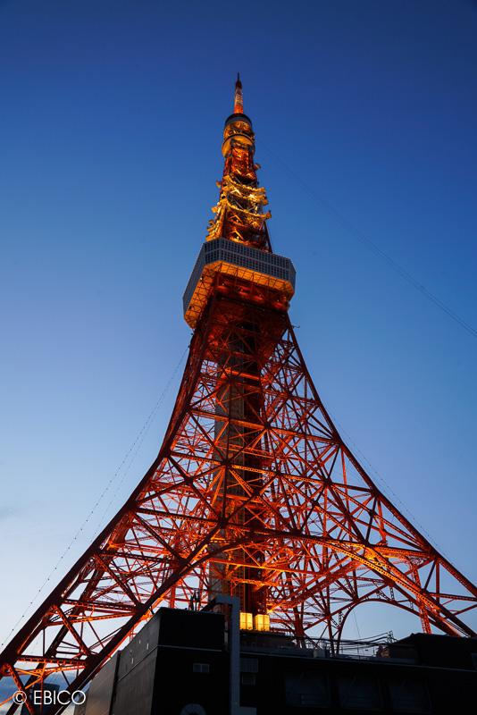 そこに在るだけで美しい【夜明けの東京タワー】