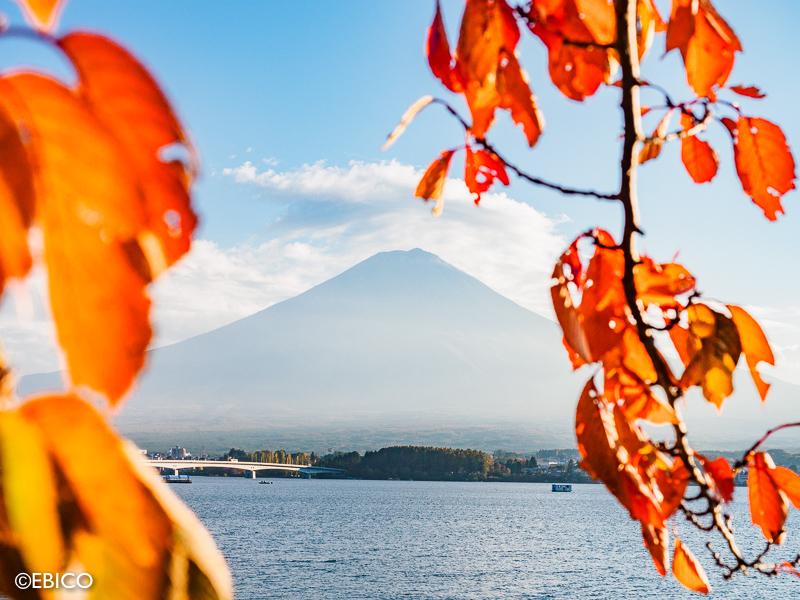 河口湖から見る美しい紅葉と富士山♪