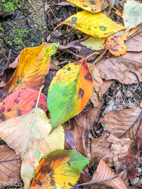 落ち葉の色彩♪【iPhoneで撮影する街の季節】