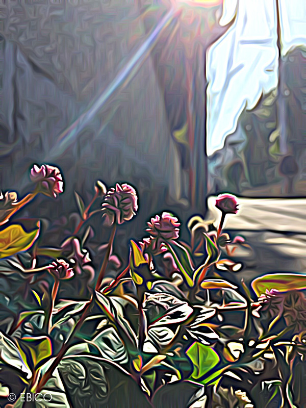道端に咲く花【お気に入りのiPhoneアプリ】
