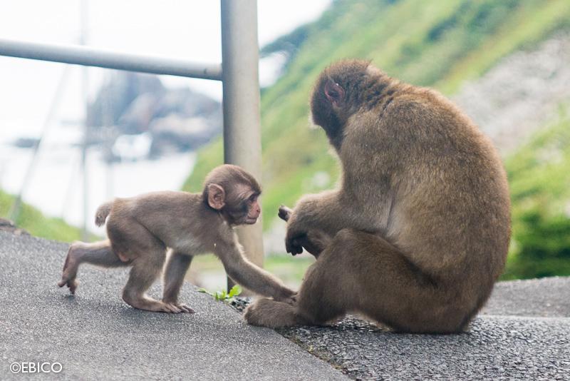 旅先で出会った親子猿♡【伊豆・波勝崎苑】