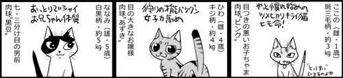 nekokawa01