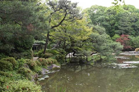 中神苑-池に張り出す松
