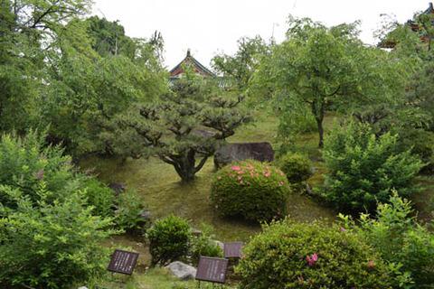 南神苑-草木