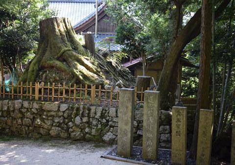 玉照院-木の根