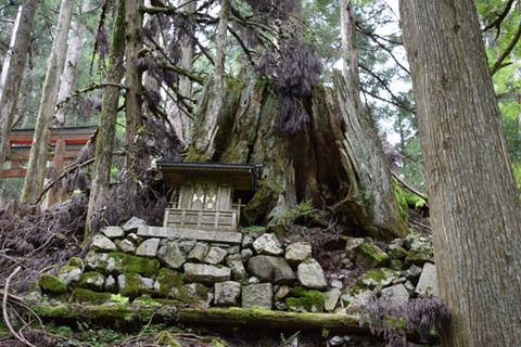 木の根の祠