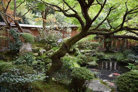 鶴亀の庭-沙羅双樹