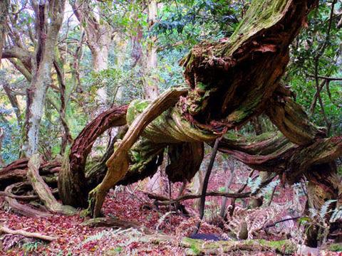 絡み合った木