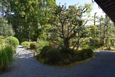 茶室への参道
