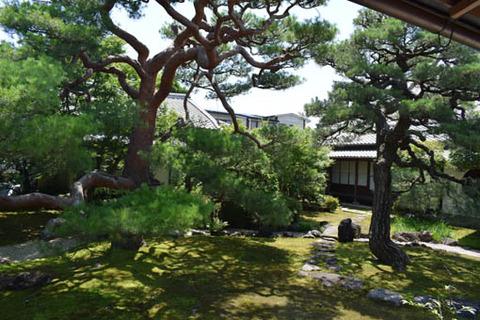 光琳曲水の庭-赤松