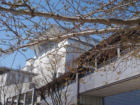 びわ湖ホールと桜