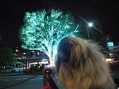 2010年11月23日 パンジャ7歳の誕生日 in 埼玉県所沢航空公園 2