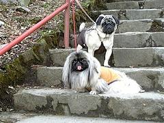 2010年3月20日 東京都青梅市 御嶽山散策 御嶽神社入口 パンジャ&たんぽぽ その2