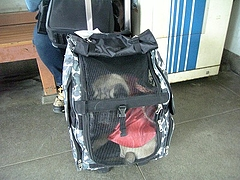 2010年4月4日 長瀞散策 コンパクトにまとまったパンジャ