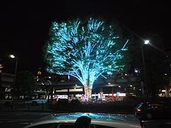 2010年11月23日 パンジャ7歳の誕生日 in 埼玉県所沢航空公園 12