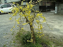 2010年4月4日 長瀞散策 野上駅