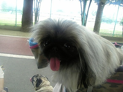 川口市青木公園お散歩(2009年07月19日)  5