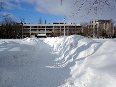 北海道大学獣医学部