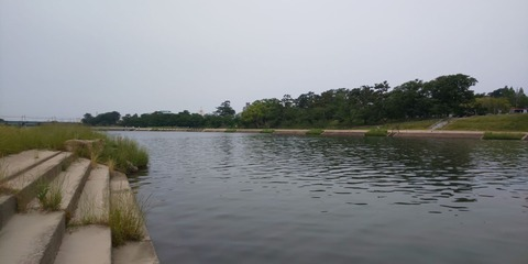 190602 岡崎市乙川河川緑地(下流側)DSC_0123-1