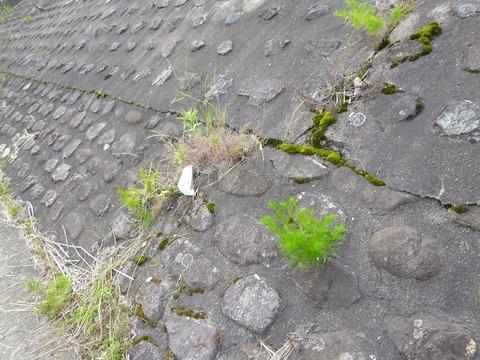 黒瀬川P1030489