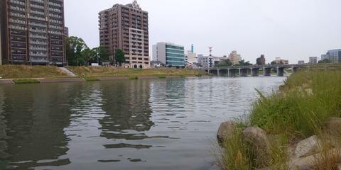 190602 岡崎市乙川河川緑地(上流側)DSC_0121-1